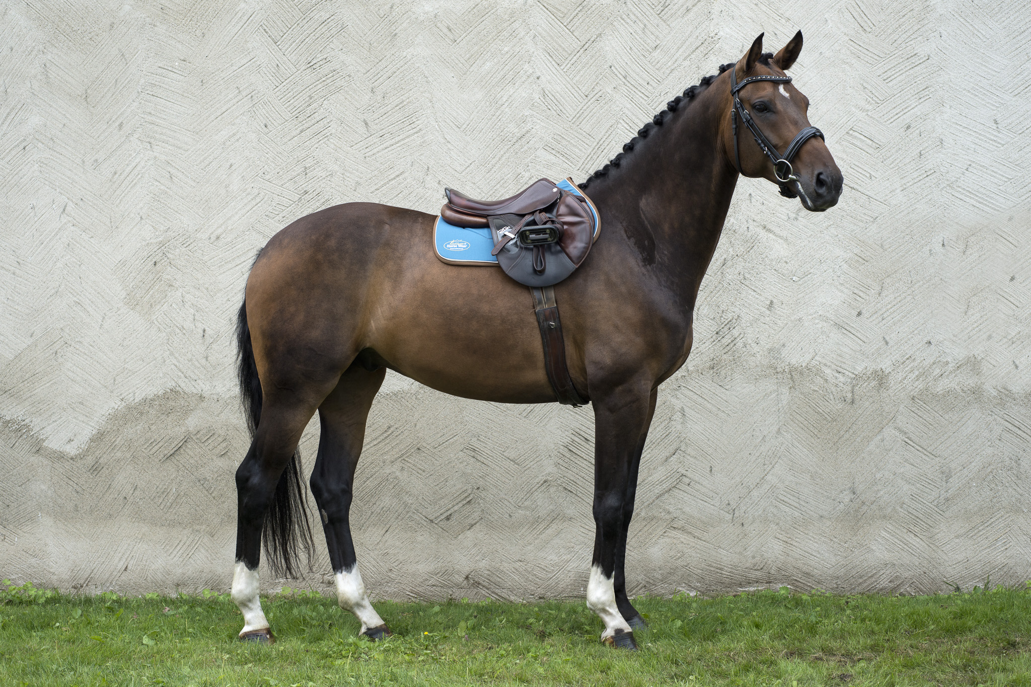 Exclusivehorsewear_DSC1115_Klar